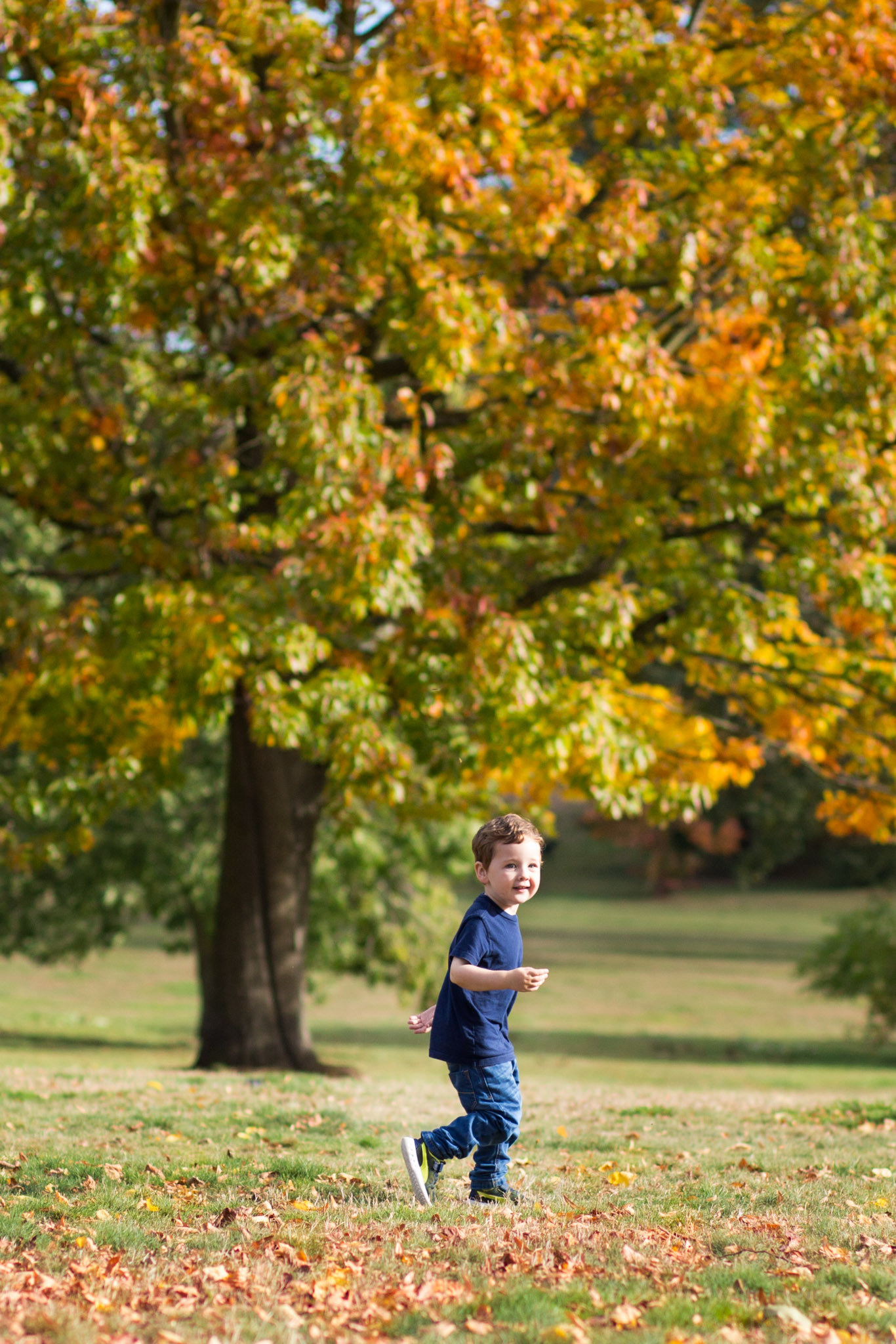 Autumn leaves in Beckenham Place Park, natural shot of young boy